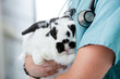 Mid Section Of Male Veterinarian Doctor Carrying A Rabbit