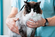 Mid Section Of Male Veterinarian Doctor Examining A Cat