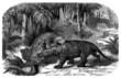 Prehistory : Dino Fighting - Cretaceus