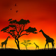 The giraffes on a red background.