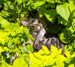 cute cat lying in the hedge
