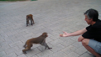 man playing with monkey