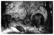 Prehistory : american Animals - Quaternary