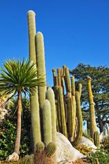 Eze, Costa Azzurra - il Giardino piante esotiche e dei cactus
