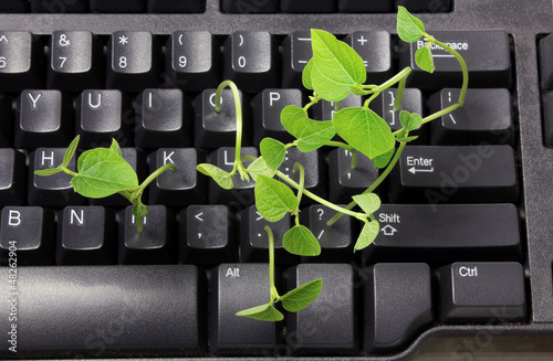 Computer Keyboard with Snow Pea Sprouts