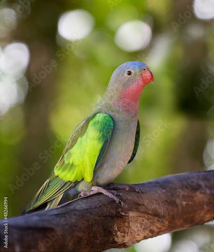 Papiers peints Perroquets a portrait of a princess parakeet