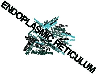 Word cloud for Endoplasmic reticulum
