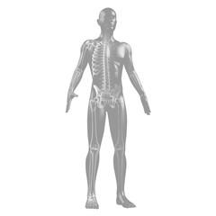 Silhouette des Menschen mit Skelett