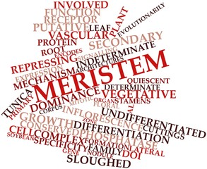 Word cloud for Meristem