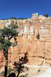 vertical view of Navajo Trail in Bryce Canyon