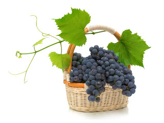 ripe grapes with leaves in a basket on a white background