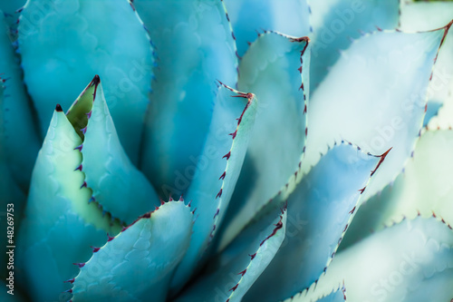 Aluminium Cactus Sharp pointed agave plant leaves bunched together.