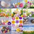 Collage with flowers, eggs an easter bunny