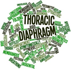 Word cloud for Thoracic diaphragm