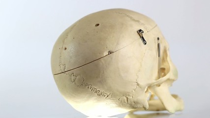 Skull - medical equipment