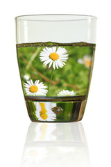 Glass of daisies. Field of daisies in a glass of water
