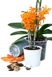 transplant orchids poster