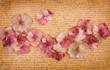 Pink hydrangea flower petals