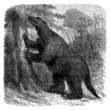 Prehistory - Fossil Animal : Mylodon
