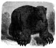 Prehistory - Fossil Animal : Megatherium