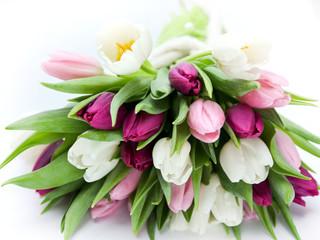 Tulpenstraß liegend