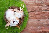 Wachteleier zu Ostern