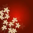 ayurveda, blüte, deko, orchidee, rahmen, valentin, vital,