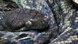 python breathing