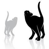 Fototapete Hintergrund - Schön - Haustiere