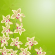 blumen, orchideen, dekoration, frühling,  wellness, vektor, öl