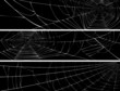 Horizontal banner of web of spider. - 48308345