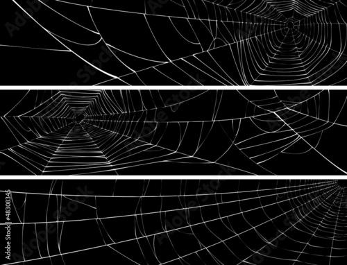 Fototapeta Horizontal banner of web of spider.