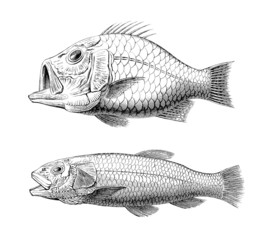 Prehistory : Fishes (Cretaceus)