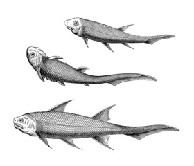 Prehistoric Fishes - Fossil Devonian Period