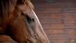 horse eyes