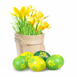 Colored Easter eggs and crocuses