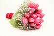 Rosaroter Tulpenstrauß liegend