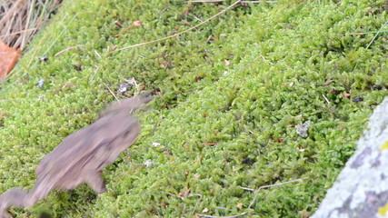 toad bufonidae amphibia animal crawl swarm moss