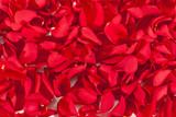 Fototapeta piękny - uroda - Kwiat