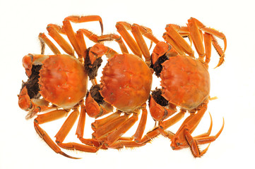 Steam Cooked Hairy Crabs