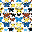 Colorful butterflies seamless pattern, vector