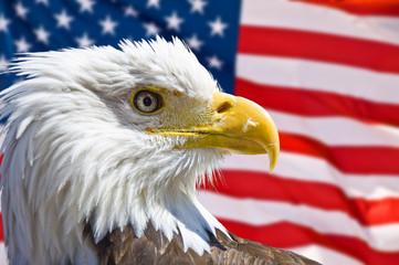 Aigle chauve et drapeau symboles USA