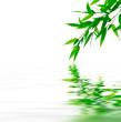 Fototapeten,blatt,verzweigt,zweig,grün