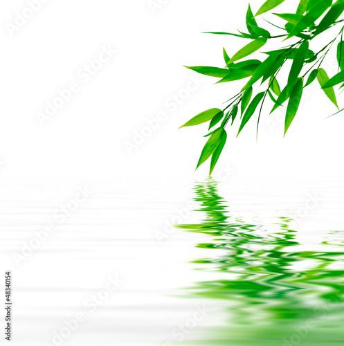Fototapeten,leaf,verzweigt,zweig,grün