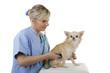 Weiblicher Tierarzt hört Hund mit Stethoskop ab