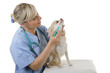 Tierarzt verabreicht Hund Medikament mit einer Spritze