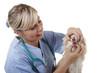 Tierarzt öffnet das Maul eines Hundes