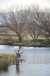 Flyfishing for trout in the Umzimkulu river,Kwazulu Natal