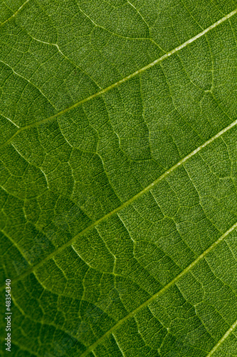 texture pattern of a green leaf