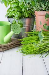 Potted Kitchen Herb Scene